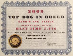 Dennis - Fastest Vizsla 2009