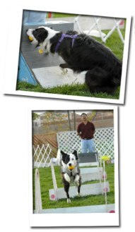 flyball_05
